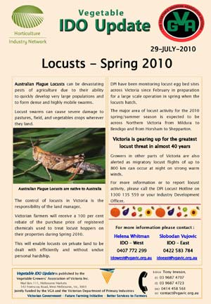 Australian Plague Locusts 2010