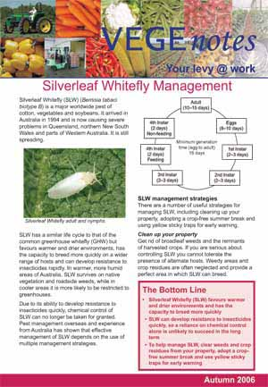 Silverleaf Whitefly management