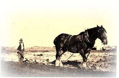 ploughing with horse