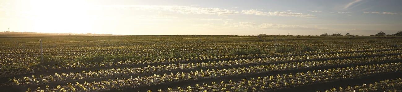 Corrigan's Produce Farms
